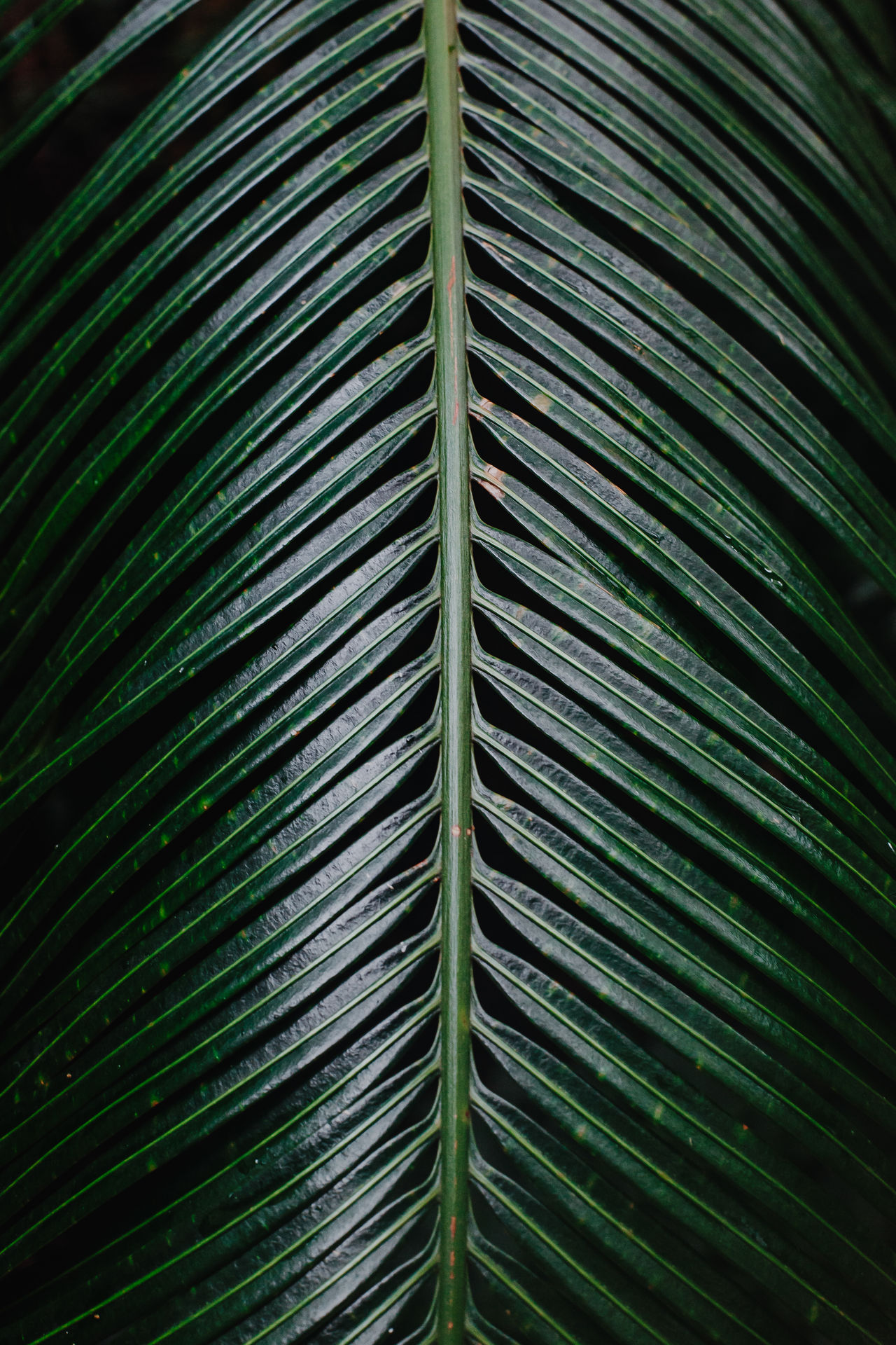 Gorgeous leaf Background For Quotes Background Nature Backgrounds Beauty In Nature Close-up Day Fragility Freshness Frond Full Frame Green Color Growth Leaf Nature No People Outdoors