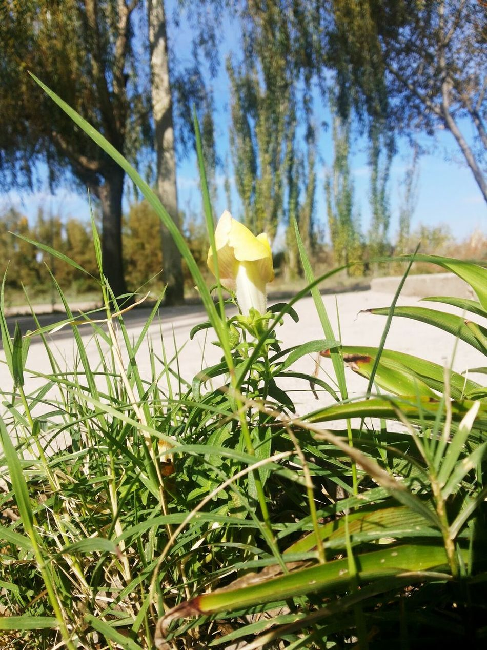 Growth Plant Nature Day Outdoors No People Flower Tree Sky Grass Close-up Flores Florence Colors Amarillo Verde Naturaleza Dia Fresco Fresh