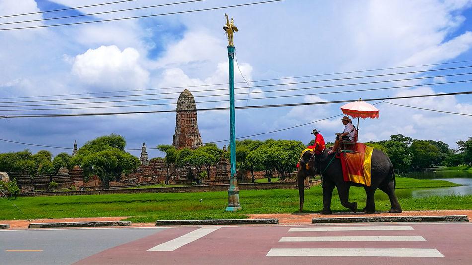 Elephant Trekking Ayutthaya Thailandtravel Thailand Thailand AnimalsElephant Temple In Thailand Elepant Wat Thai Elephant Ride