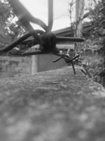 Thorns Black White Inspired Photography EyeEm