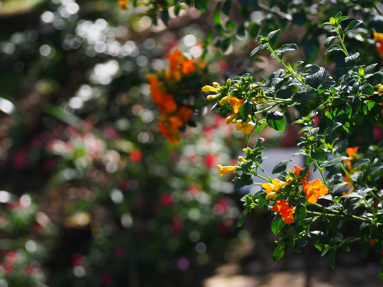 growth, nature, plant, beauty in nature, day, outdoors, no people, tree, freshness, flower, green color, fruit, fragility, close-up
