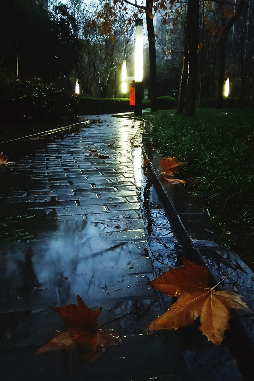 leaf, water, nature, tree, autumn, night, tranquility, outdoors, wet, no people, illuminated, beauty in nature, puddle