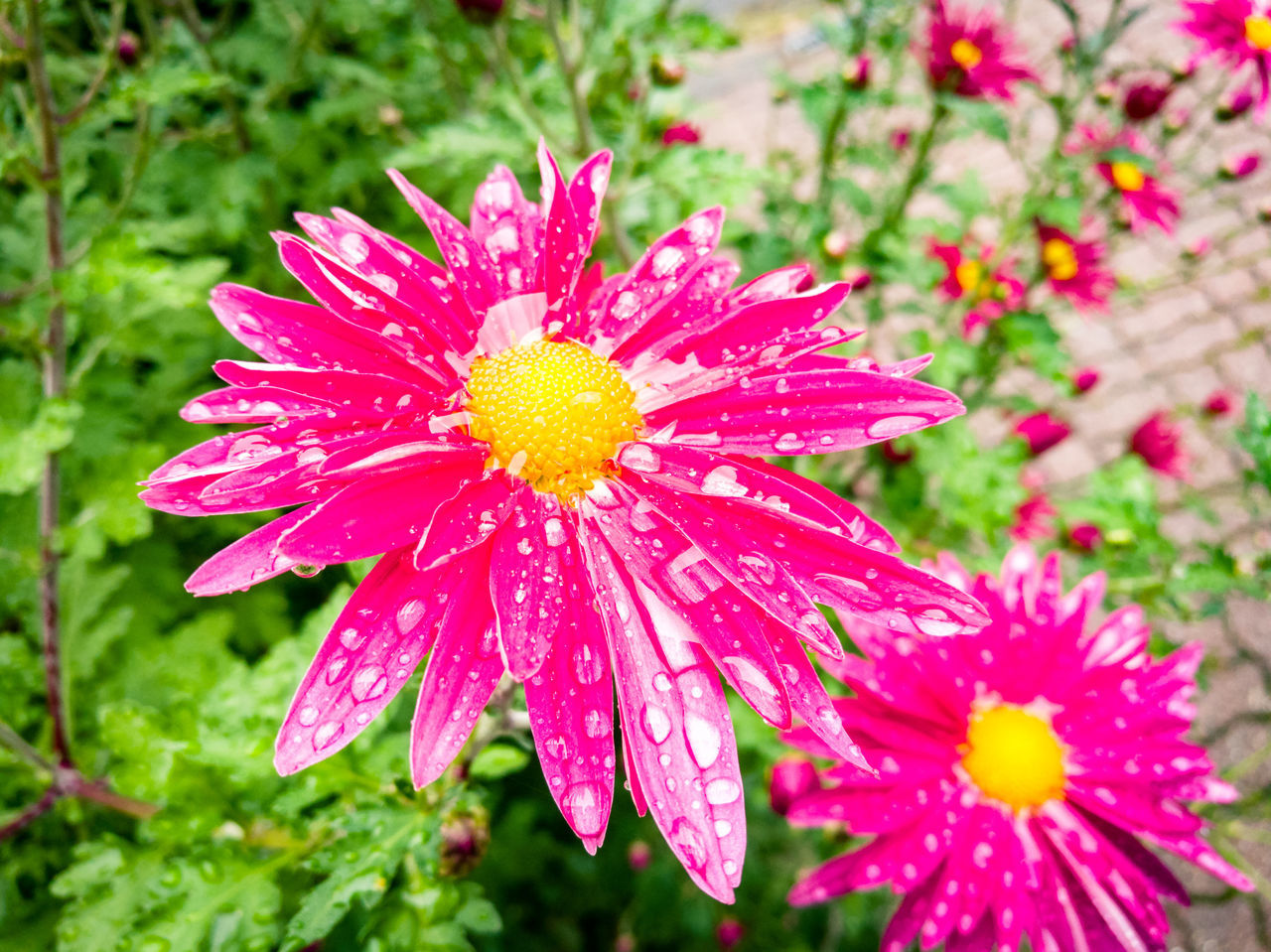 Flower Nature Beauty In Nature Petal Flower Head Growth Freshness Pink Color Fragility Close-up Red Outdoors Plant No People Pollen Day Horizontal Red Color Focus On Foreground Beauty In Nature