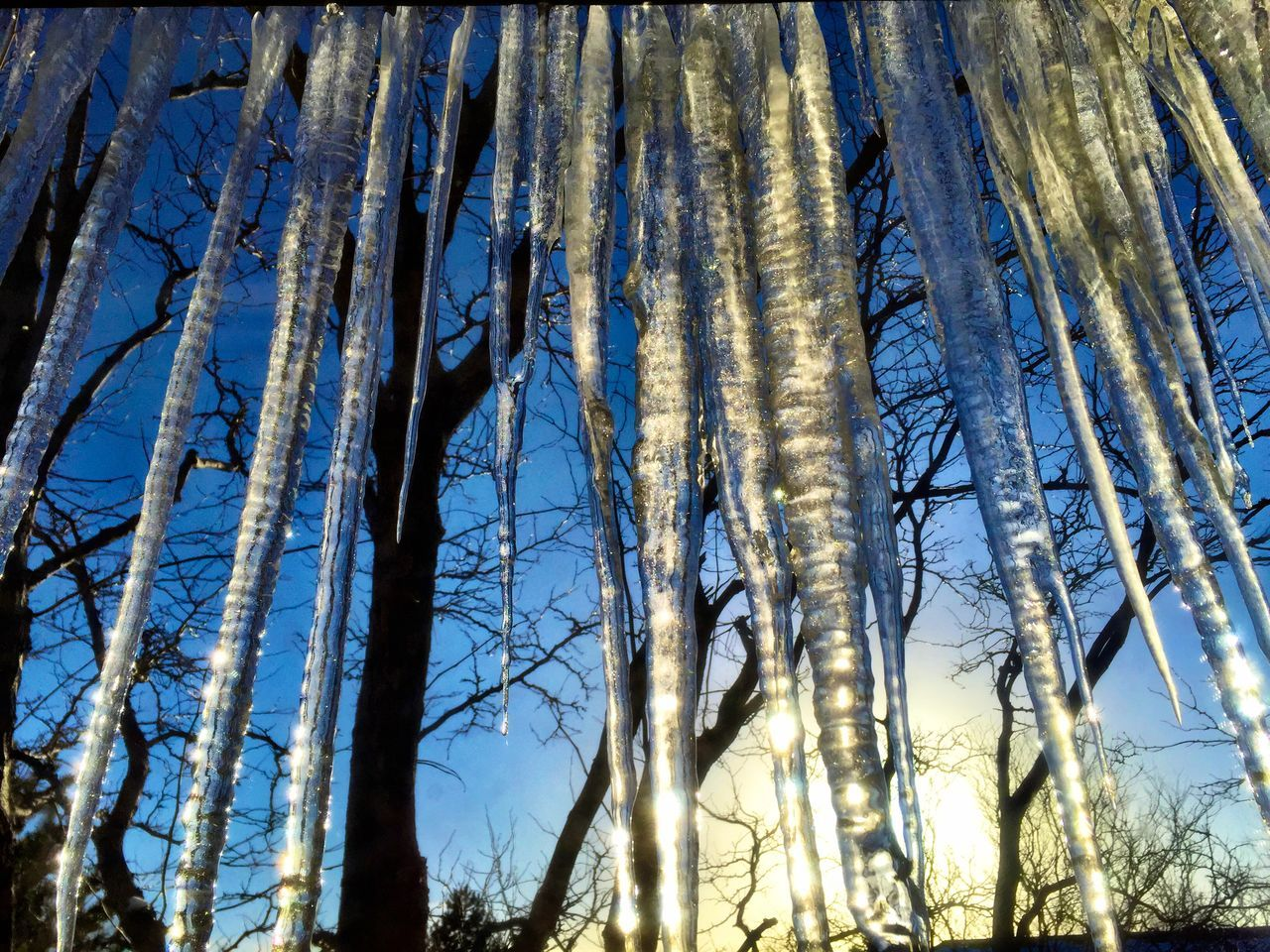 Low Angle View Of Icicles Against Bare Trees