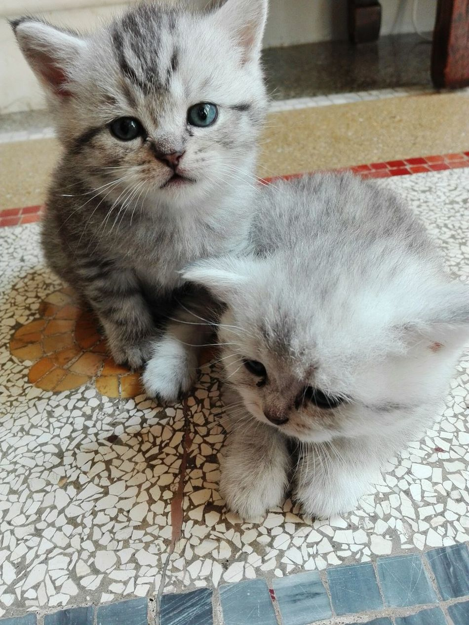 Baby boy& baby girl so cute.. Kitten Sweet♡ Puppy Face Puppy Power
