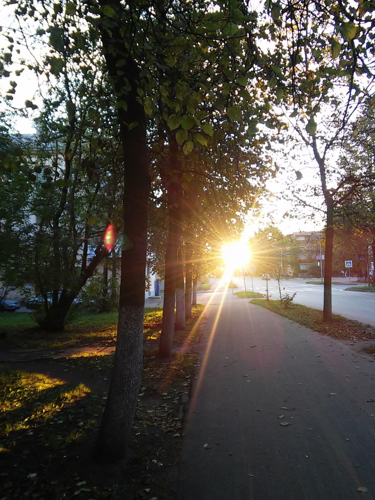Beauty In Nature Nature Sun Sunlight Sunset The Way Forward Tree Velikiy Novgorod