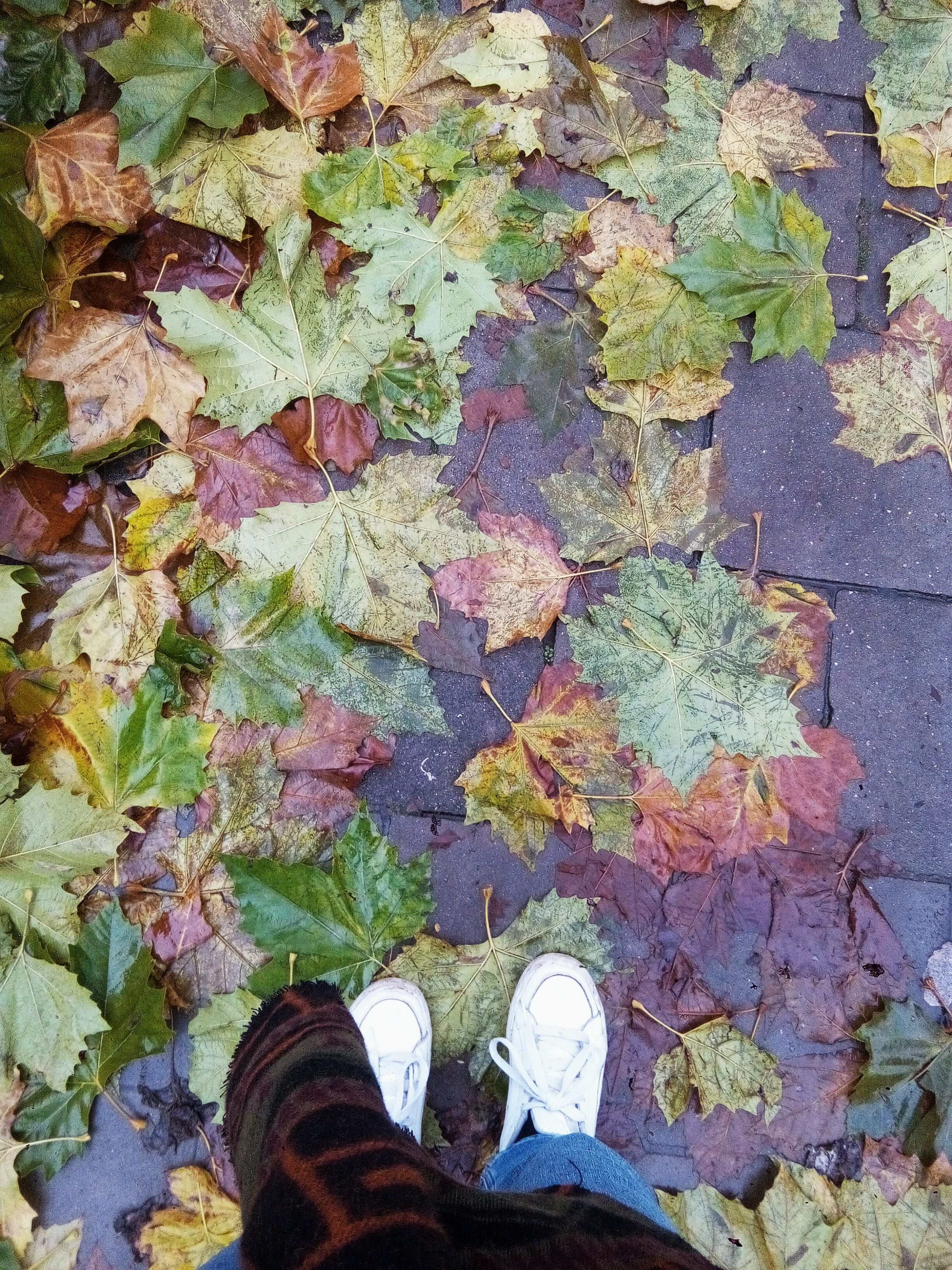 shoe, multi colored, low section, real people, street, lifestyles, human leg, personal perspective, high angle view, standing, leaf, outdoors, one person, leisure activity, day, human body part, close-up, men, people