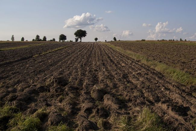 Agricultural Agriculture Beauty In Nature Blue Crop  Cultivated Land Day Dirt Farm Field Growth Landscape Nature No People Outdoors Plantation Plough Plowed Field Rural Scene Scenics Sky Soil Tranquil Scene Tranquility Tree