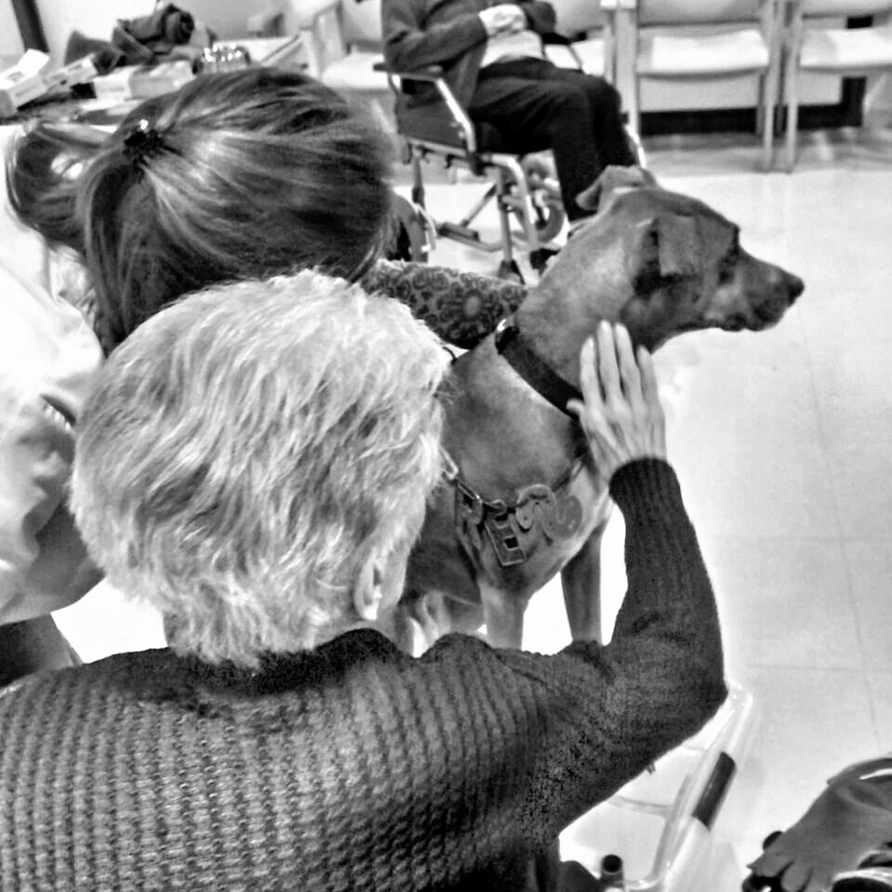 Dog Therapydogs Black And White Photography Black And White My Dog Tres