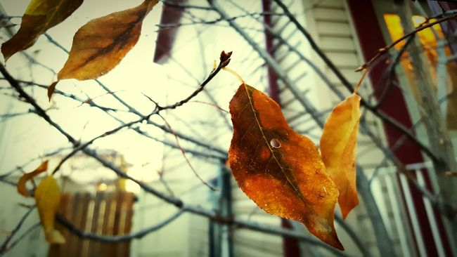 Autumn Focus On Foreground Leaf Change Outdoors Nature Day No People Close-up Bare Tree Tree Sky Artistic