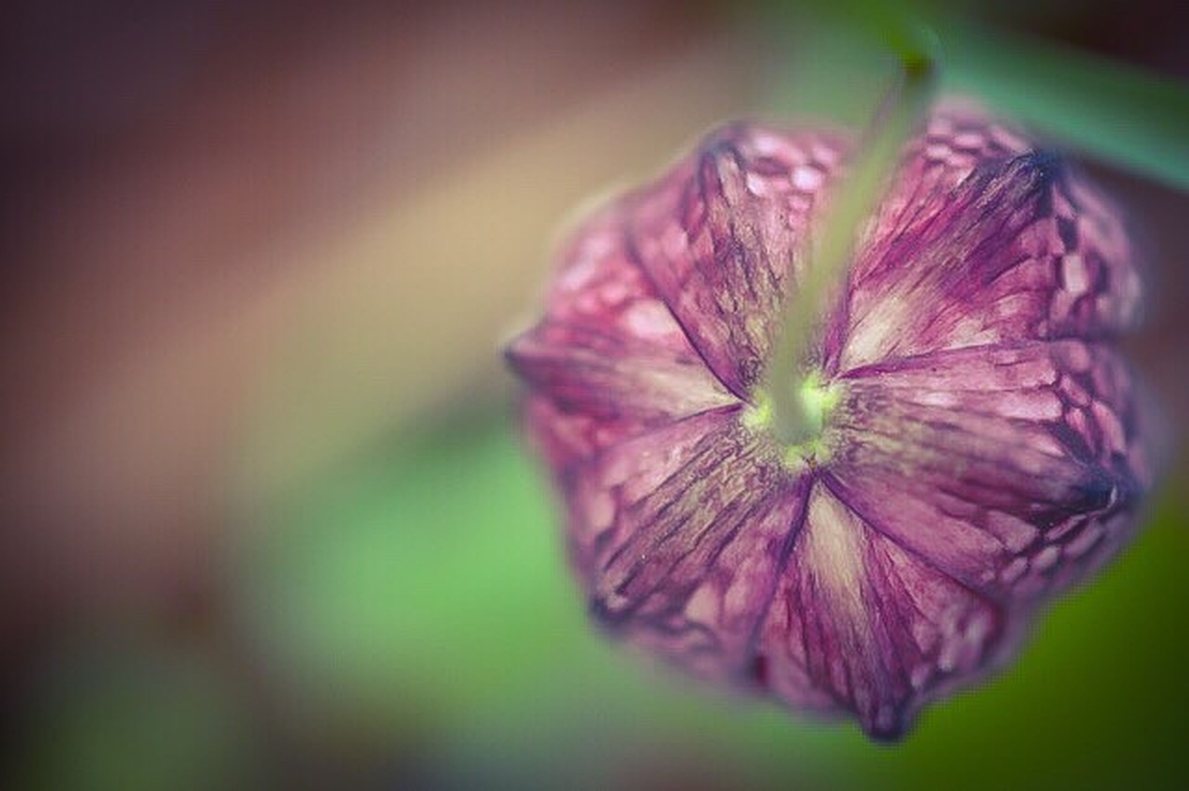 purple, close-up, nature, plant, flower, beauty in nature, flower head, leaf, fragility, silence, no people, freshness, outdoors, day