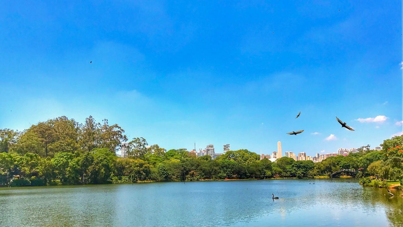 bird, flying, tree, water, animal themes, river, nature, animals in the wild, day, architecture, beauty in nature, outdoors, mid-air, sky, no people, animal wildlife, spread wings, building exterior, scenics