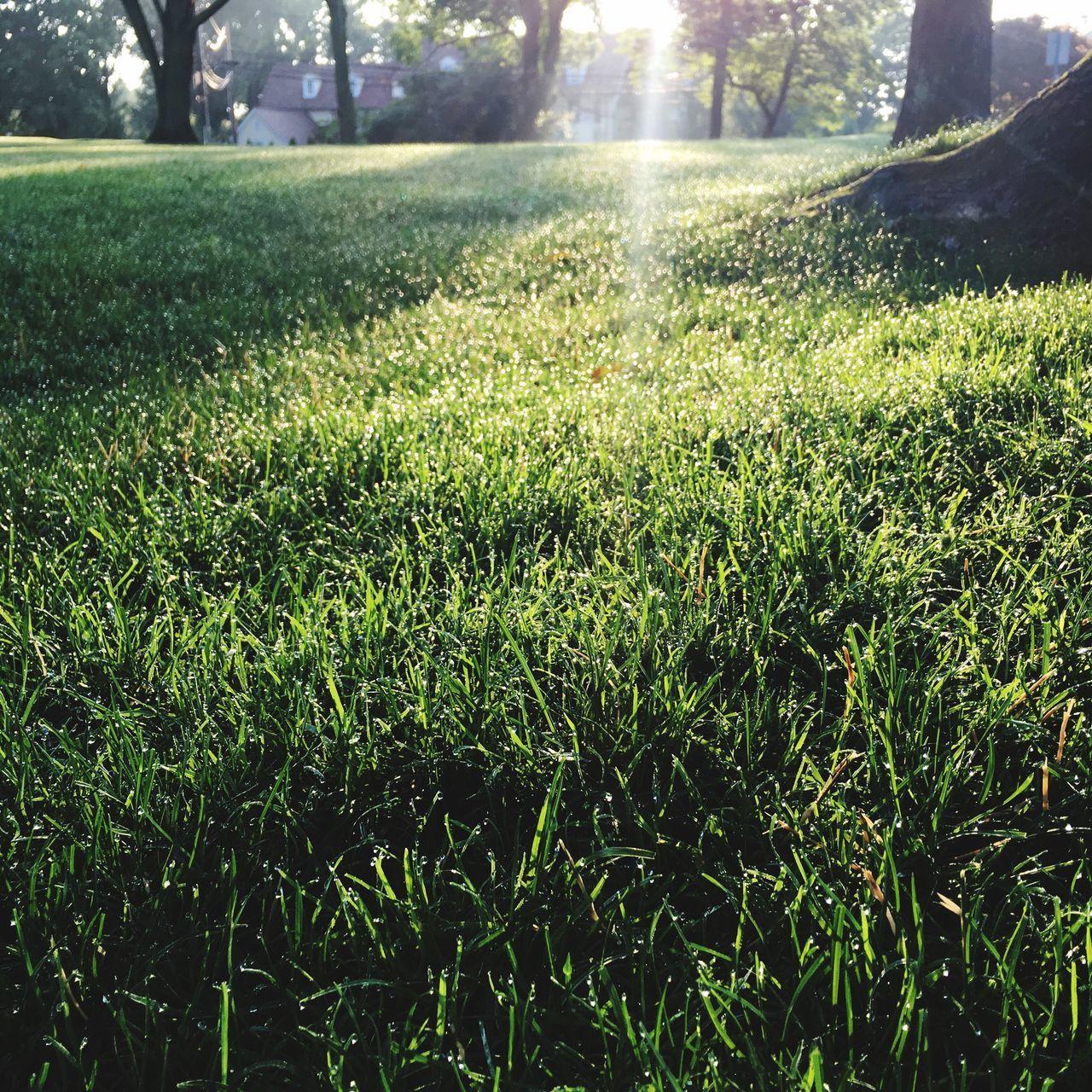 early morning splendor