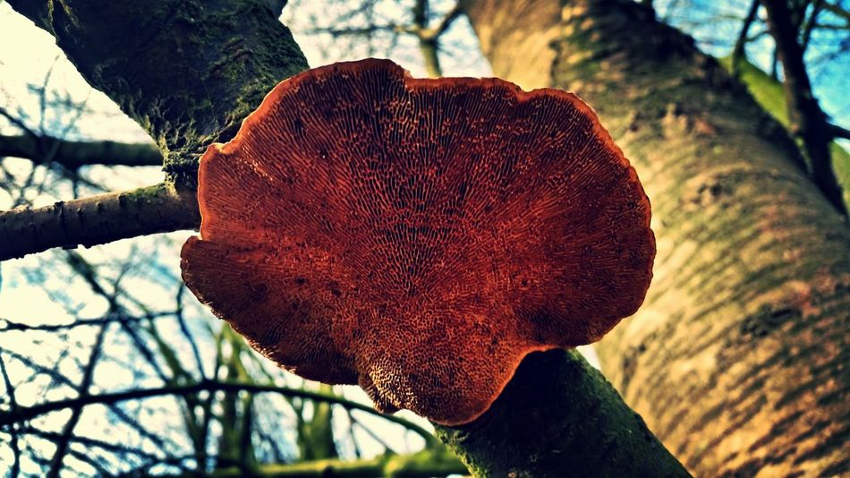 Nature Photography Mushroom_pictures Mushroom Art Mushrooms Mushroom Man Mushrooms 🍄🍄 EyeEm Best Shots - Nature Nature_collection Eyem Nature Forrest Photography Nature Forrest EyeEm Nature Lover Mushroom Close-up Mushrooms Gallery Eyeem Best Shots Mushrooms Natural Art  Netherlands Natural Beauty
