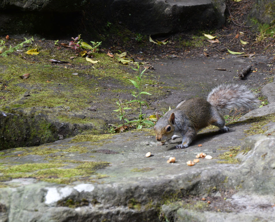 Hungry Squirrel Dunfermline Fife  Nature No People Outdoors Pittencrieff Park Relaxation Scotland