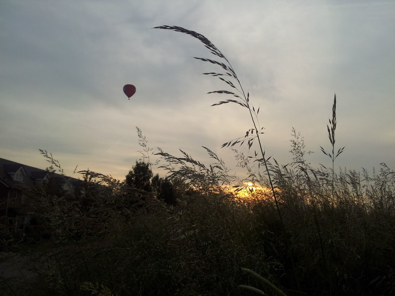 Bare Tree Beauty In Nature Day Hot Air Balloon Landscape Nature No People Outdoors Sky Sunset Tree