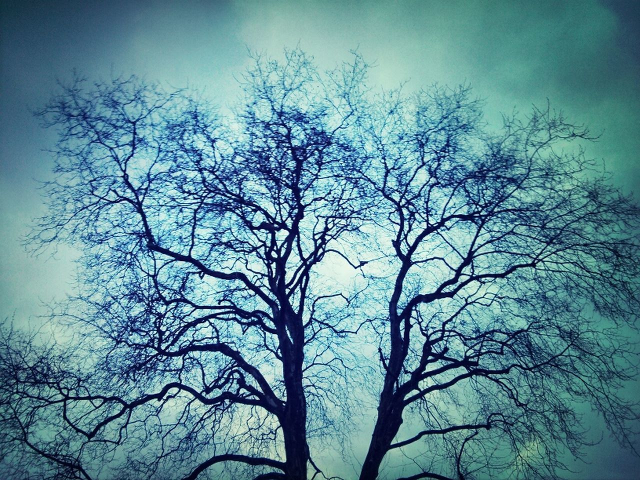 nature, low angle view, beauty in nature, branch, tree, tranquility, no people, bare tree, sky, outdoors, scenics, day
