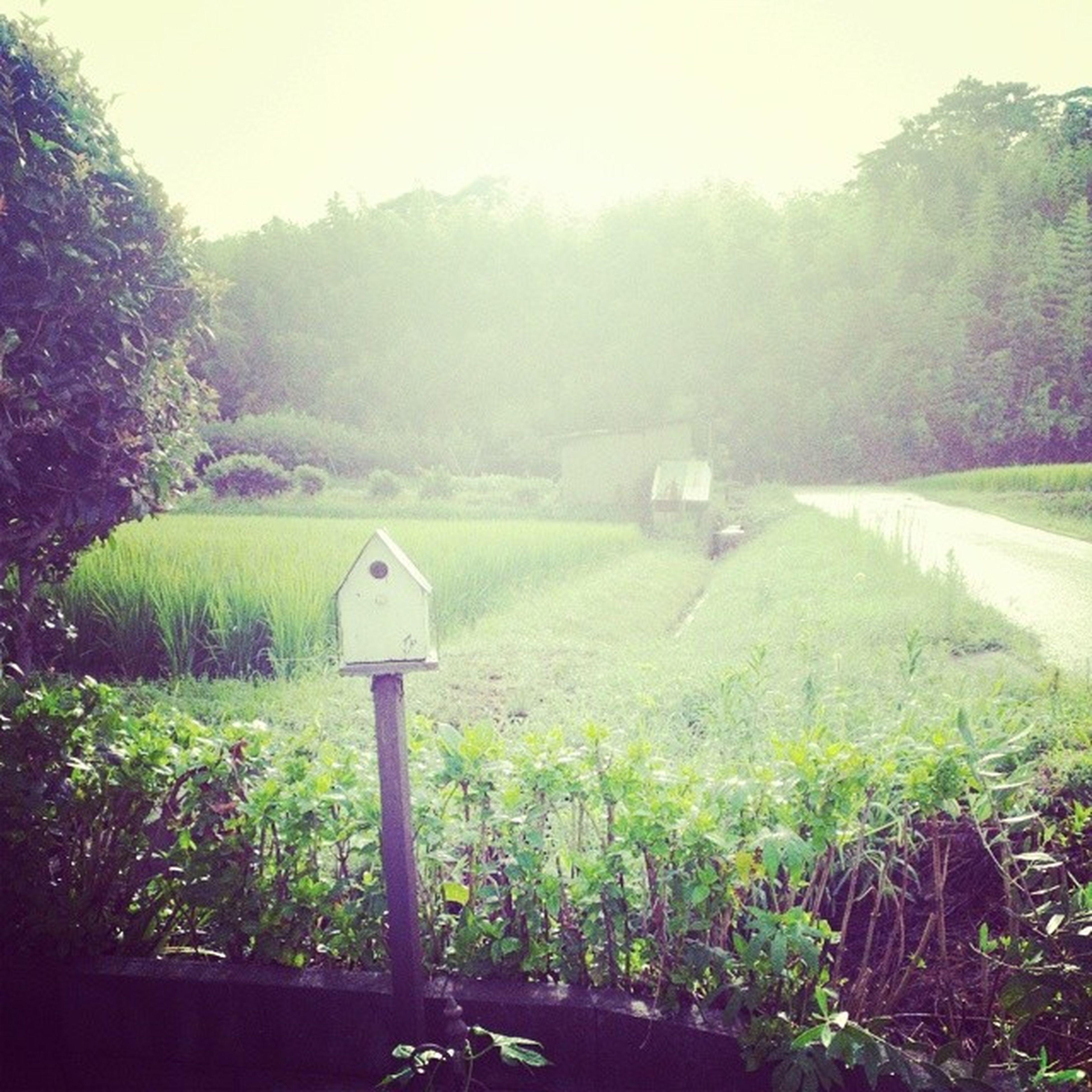 今年も静かにすごします~。 いつかは鳥取に帰りたい。