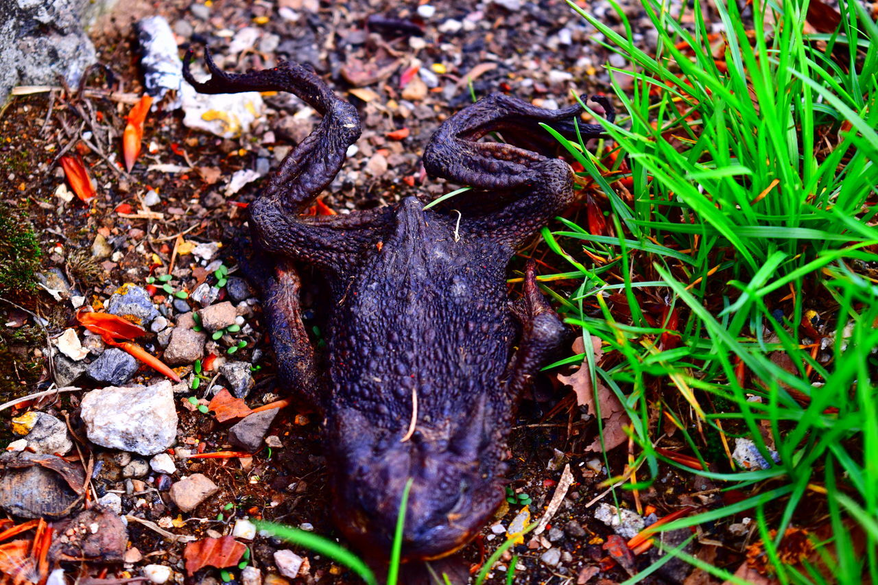 Animal Animals Dead Dead And Alive Dead Animal Dead Animal Collection Dead Animal On The Roadside Dead Animals Frog Frog Perspective Froggie