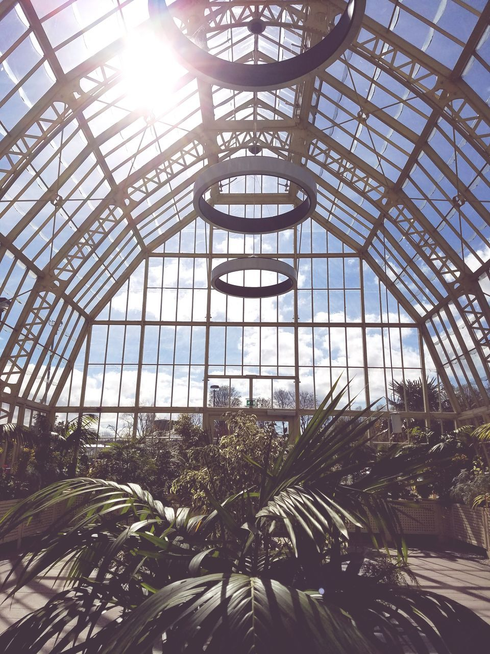 plant, growth, greenhouse, indoors, day, no people, palm tree, low angle view, tree, nature, plant nursery, architecture, sky