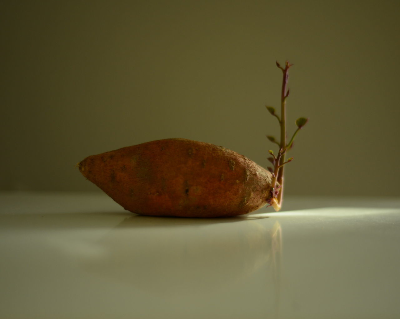 Brown Creativity Dried Plant Fragility Freshness Indoors  No People Plant Single Object Still Life Studio Shot Sweet Potatoes Table