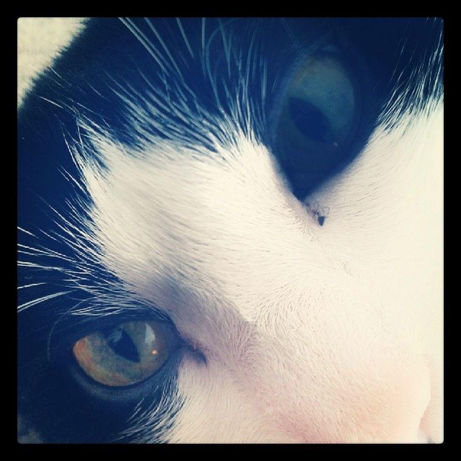 Catsofinstagram Lazycatdaze Themingming Readyformycloseup