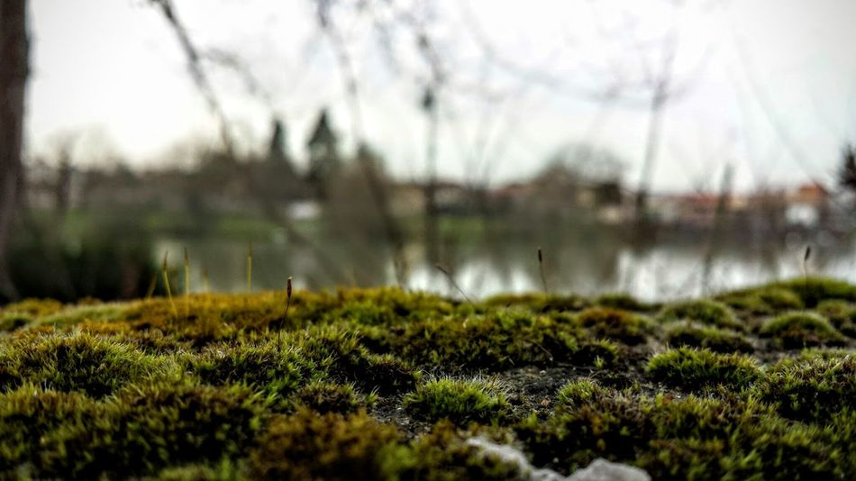 La Seine ... Beauty In Nature Cold Day Field Nature No People Outdoors Selective Focus