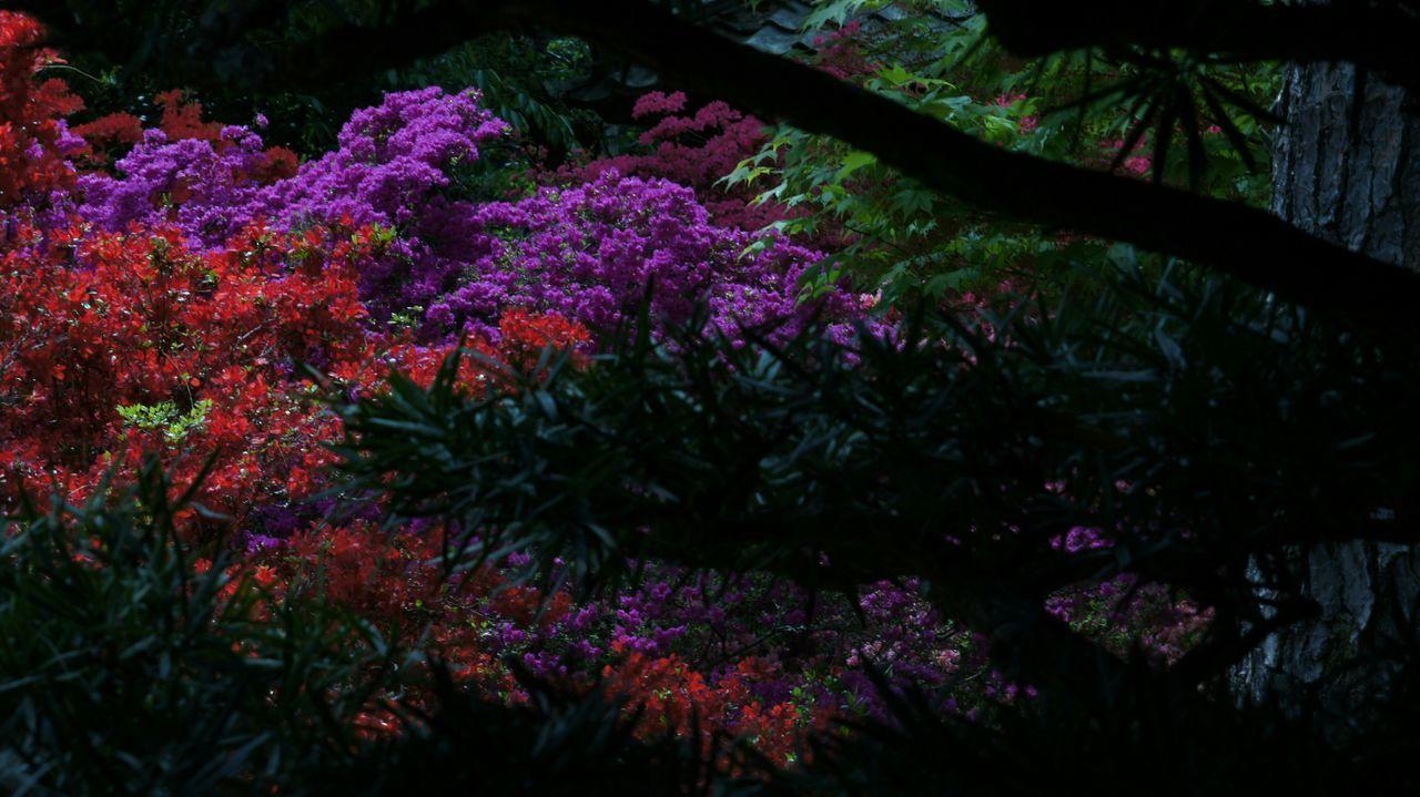 Flower Tree Growth Springtime Day Nex5 Kyoto Buddhist Temple Tree Elmar9cmf4