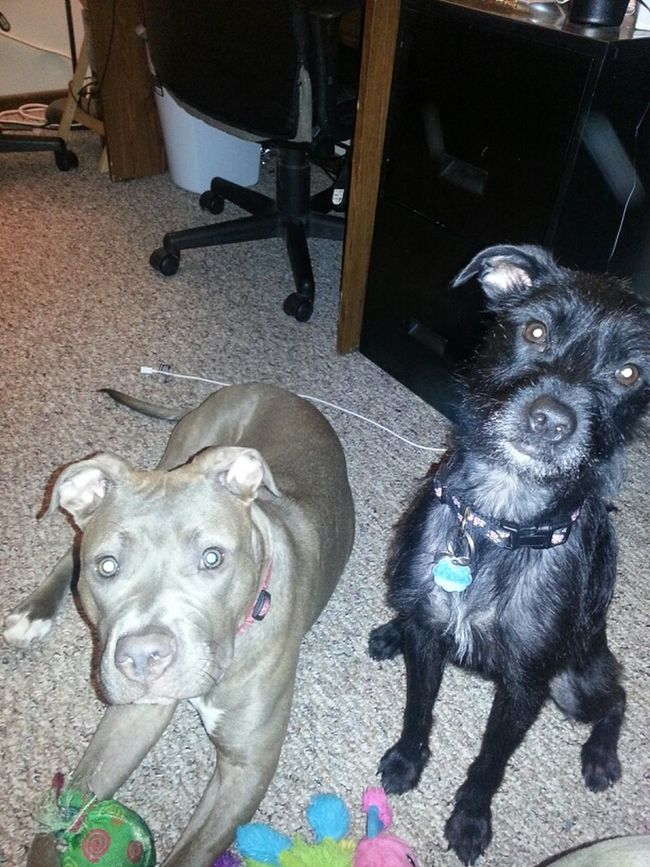 My Life So Adorable I Love My Dogs Worlds Cutest Dogs