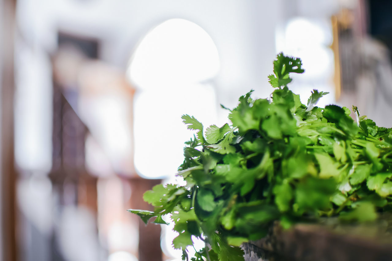 green color, food, close-up, focus on foreground, no people, freshness, healthy eating, indoors, leaf, day