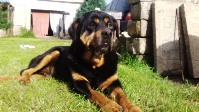 Ginuška.. Relaxing Dog Sunny Day