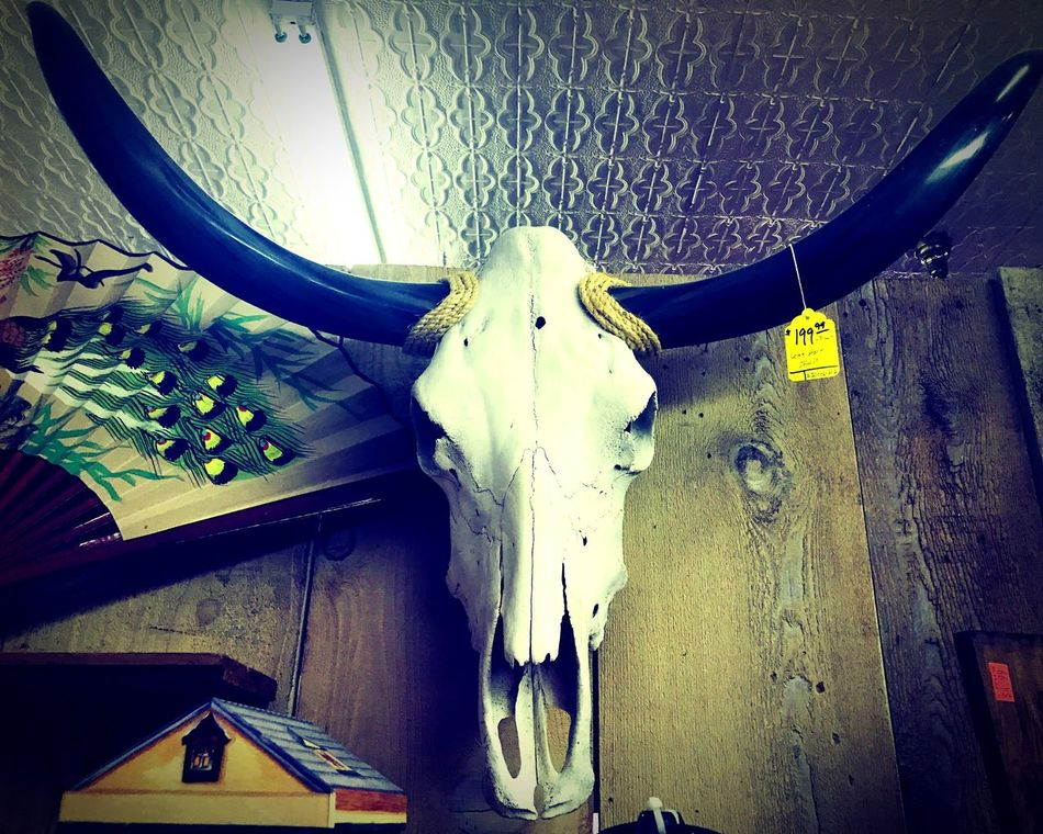 Takethebullbythehorns Antiques Vintage Skull Animal Bone Longhorn Lifeanddeath