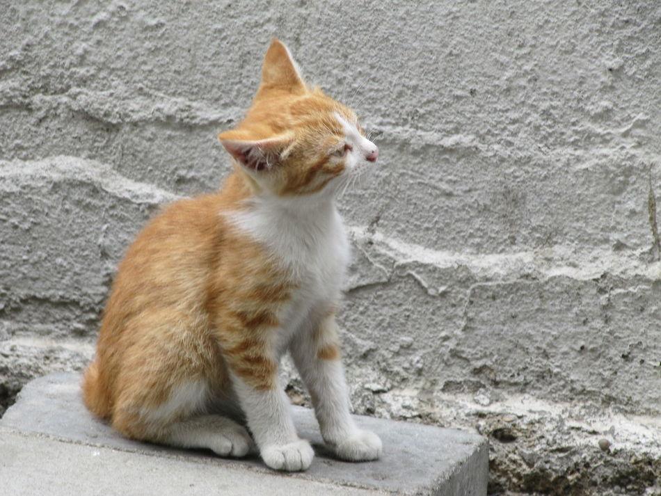 Animal Themes Cat Istanbul Istanbul Cats Kadıköy Outdoors Pets Street Cats