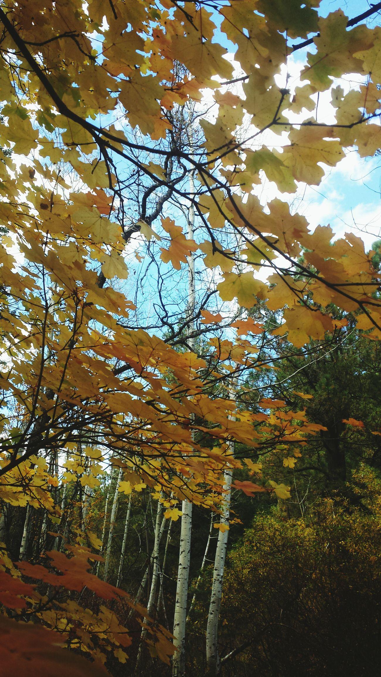 Halloween Mountlemmon Autumn Nature