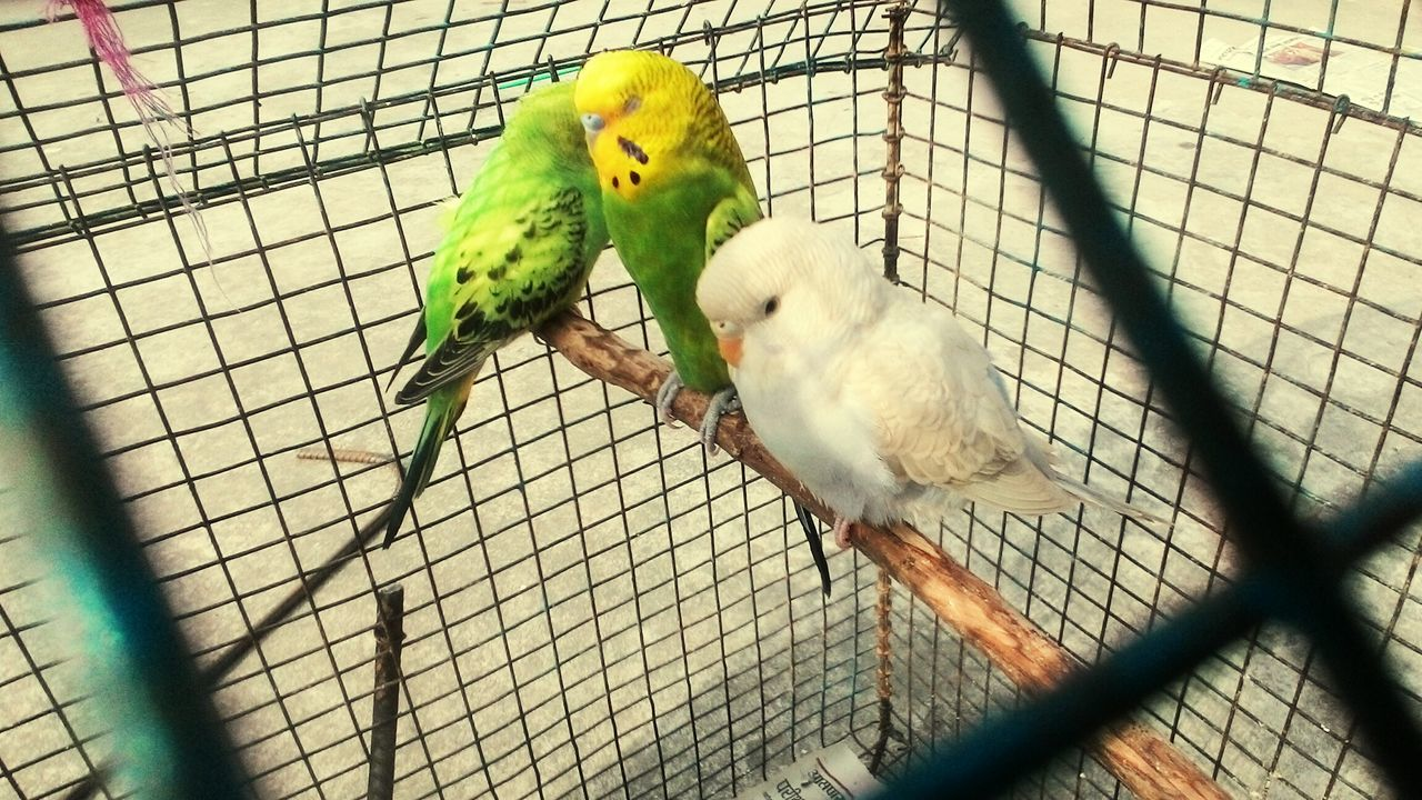 Pastel Power First Eyeem Photo Sweet♡ Birds🐦⛅ FirstEyeEmPic Love ♥
