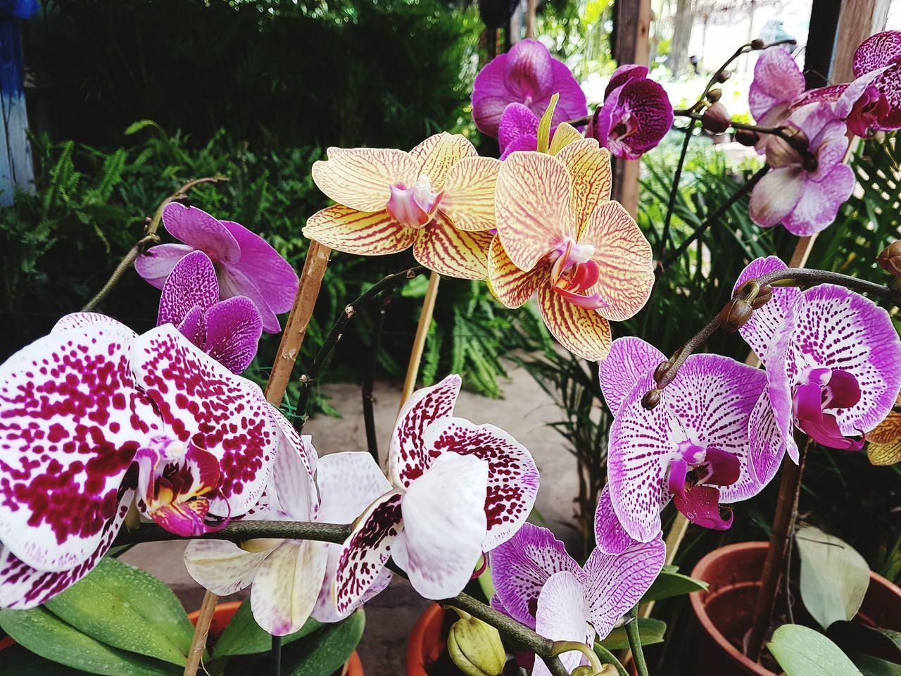 Orquideas Honduras