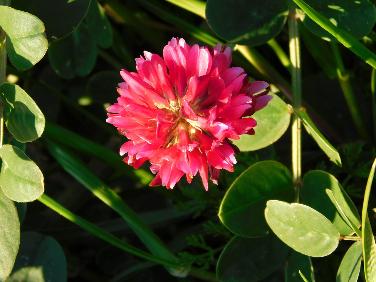 flower, petal, beauty in nature, growth, nature, flower head, freshness, fragility, plant, leaf, pink color, no people, blooming, outdoors, day, green color, close-up, zinnia