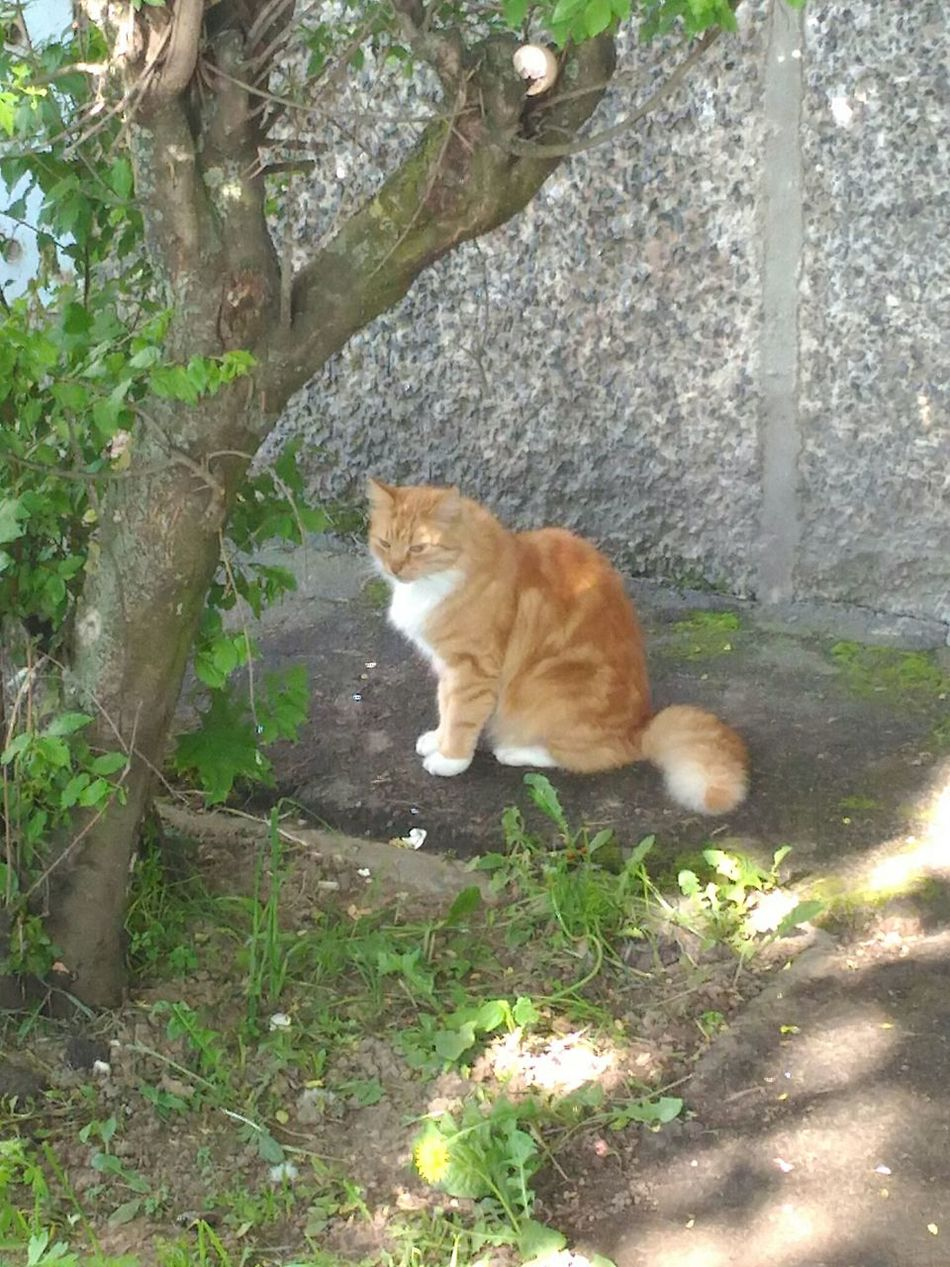 кот Котэ 😻 Gatto😸 Cat Kot