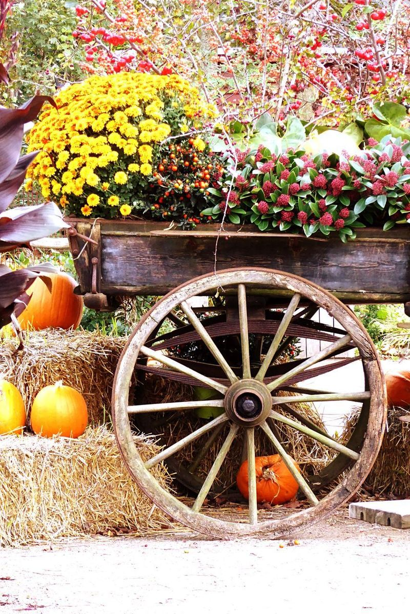 Denmark 🇩🇰🇩🇰🇩🇰 Odense City Dekoration Old Wagon Wheel In The Garden Hay Bale Pumpkins Halloween 2017 Tranquility Tradition Scaryly Beautiful Old Tradition Jack O Lantern Wagon Wheel Wood - Material No People Outdoors Freshness EyeEm Best Shots Yellow Chrysanthemum