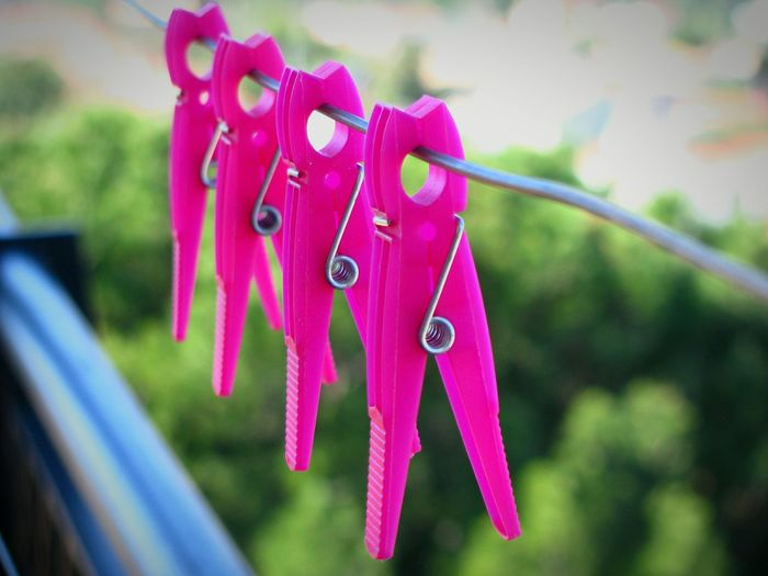 Millennial Pink Pink Pink Color Focus On Foreground Hanging Close-up Nature Growth Laundry No People Clothes Pegs Clothes Pins Clothes Peg Clothes Pin Symmetry Series Of Four Series Of Things Abundance Four Alignment Row Rows Of Things EyeEm Diversity