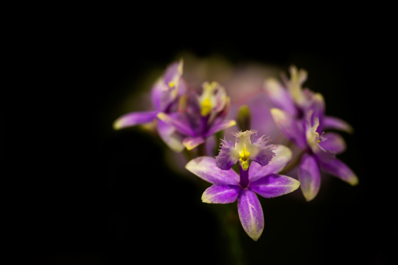 Beautiful stock photos of orchid, Bangkok, Beauty In Nature, Blooming, Close-Up