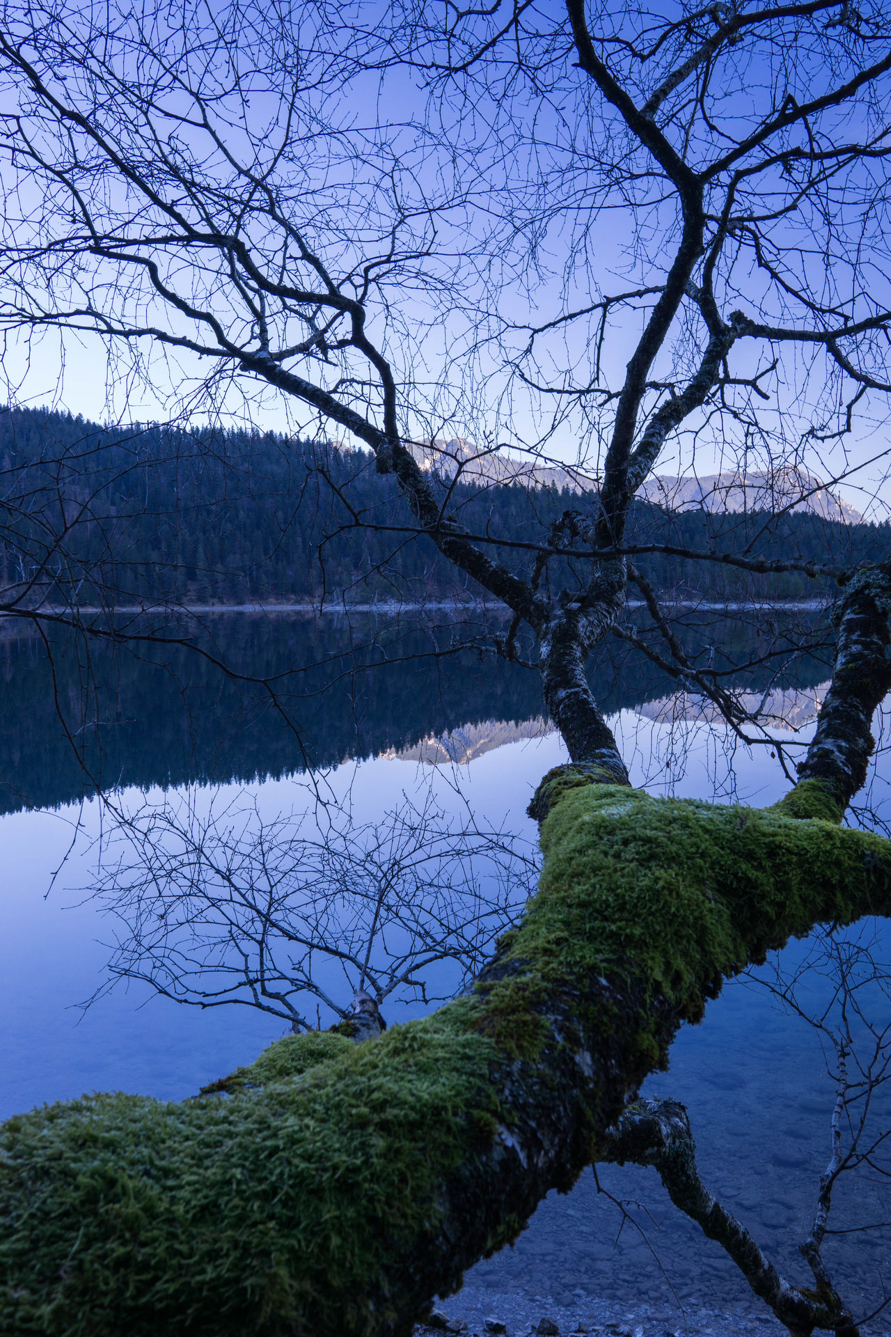 Alps Bare Tree Beauty In Nature Branch Day Eibsee Growth Lake Nature No People Outdoors Reflection Scenics Sky Tranquil Scene Tranquility Travel Destinations Tree Water Zugspitze Beautiful Nature