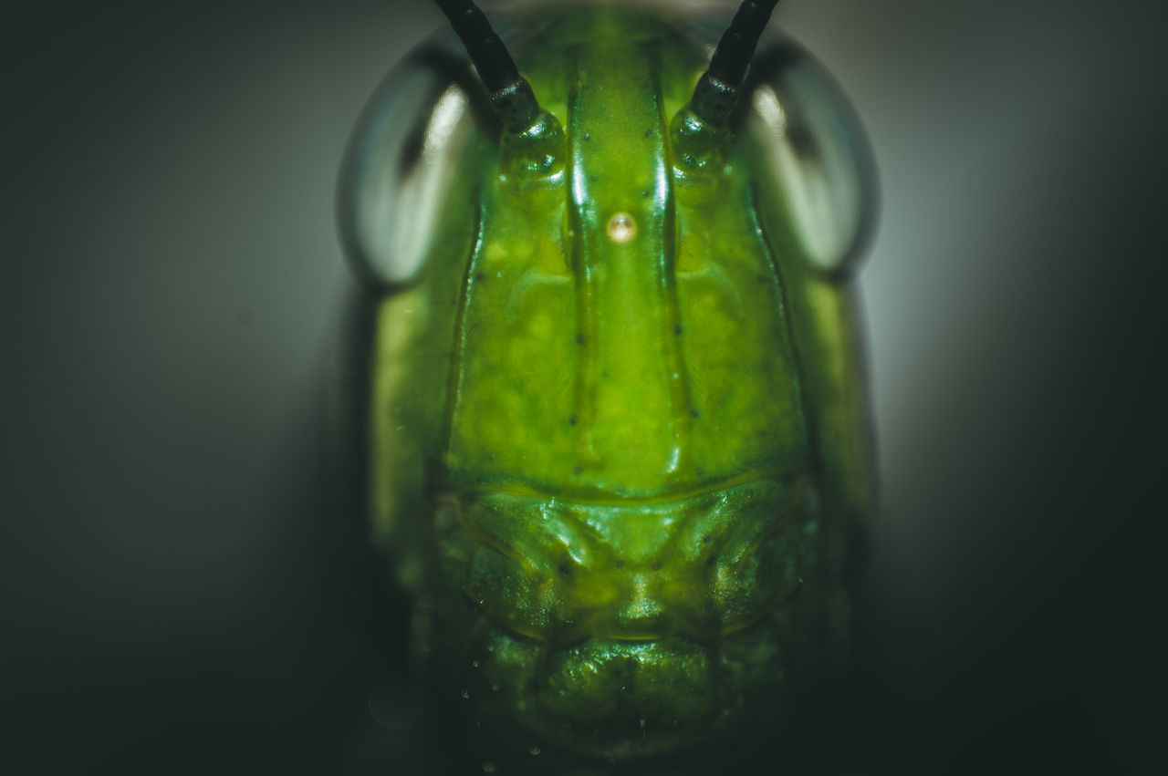 Potrait Model Close-up Macro Nature Green Color Beauty In Nature Grasshopper Insect