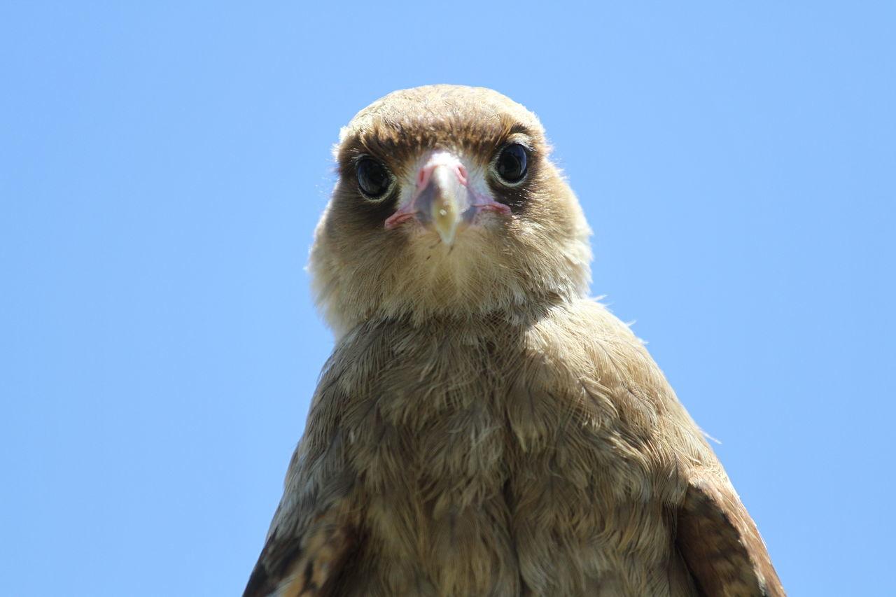 Beautiful stock photos of eule, animal themes, one animal, bird of prey, bird