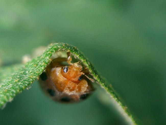 the beginning is the end Macro Oneplusone Macro_perfection Ladybug Macro Photography Smartphonephotography OnePlusOne📱 Macro Nature