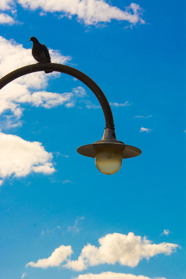 Animal Themes Blue Cloud Cloud - Sky Day Electric Light Lamp Post Lighting Equipment Low Angle View No People One Animal Outdoors Pigeon Pigeonslife Sky Street Light Streetlamp