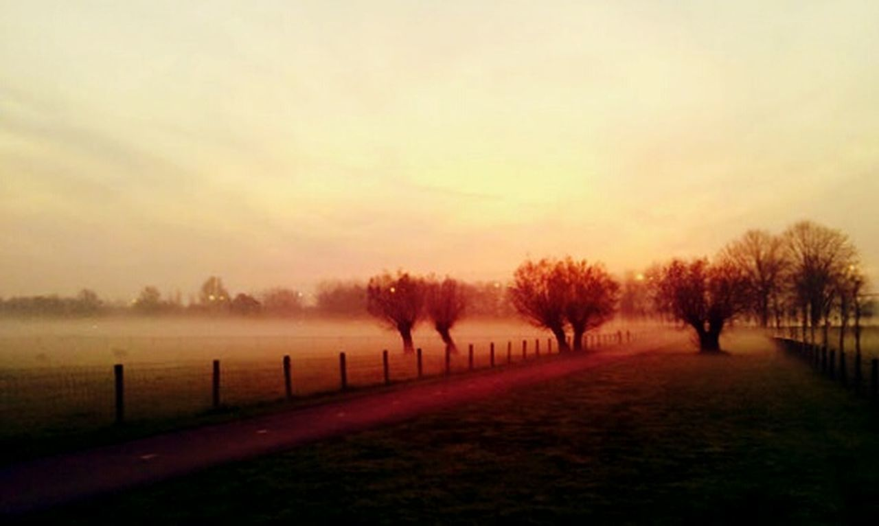 fog, scenics, nature, tree, outdoors, landscape, sunset, beauty in nature, tranquility, dawn, autumn, cold temperature, winter, no people, grass, multi colored, rural scene, sky, day