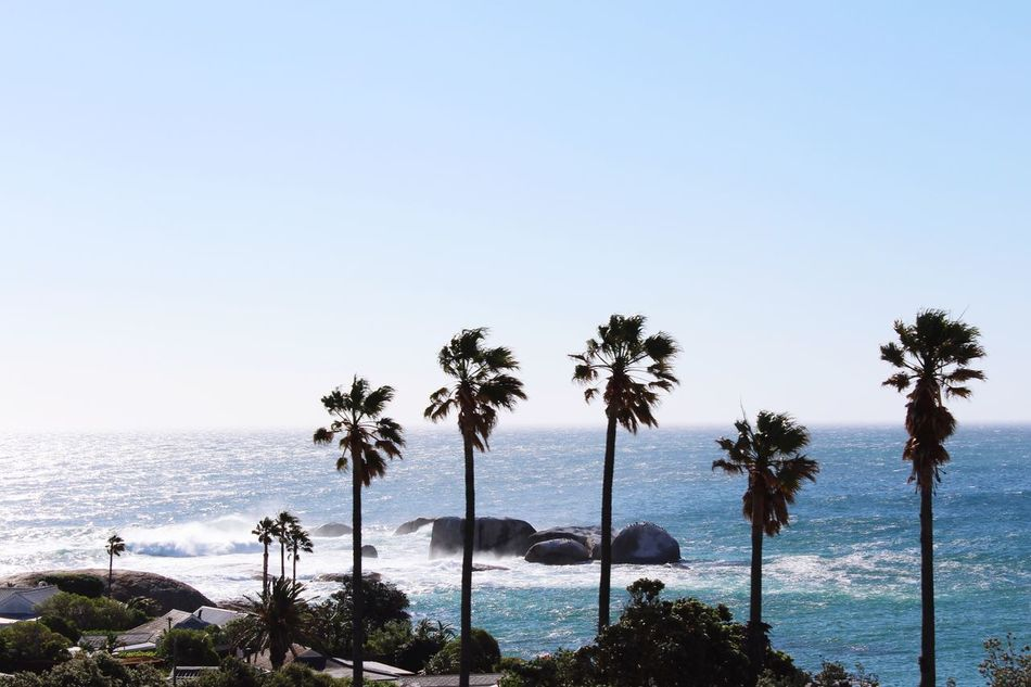 Palm Trees Coastline South Africa Ocean Ocean View Palm Cape Town Africa Sea And Sky Seascape Oceanside Beachphotography Beach Photography Seaside Oceanview Beach Life Windy Turquoise Blue Sky Blue Wave Blue Sea