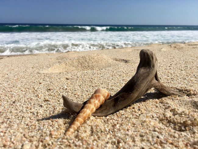 Driftwood, shell, sand Close-up Travel Destinations and sea. Sea Beach Horizon Over Water Shore Sand Vacations Tranquil Scene Relaxation Outside Photography Beachphotography No Filter Cabo EyeEmBestPics Mexico IPhoneography Los Cabos Beachlife Eyem Best Shots Group Of Objects