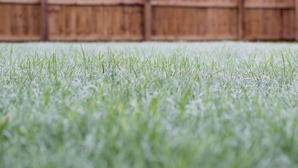 Dew First Frost Freezing Freezing Cold Frost Garden Winter Wintertime